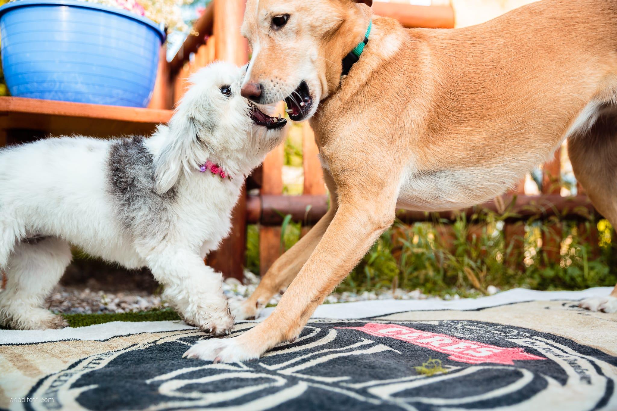 Sara Marco matrimonio Grado campeggio Punta Spin Gorizia preparativi cani