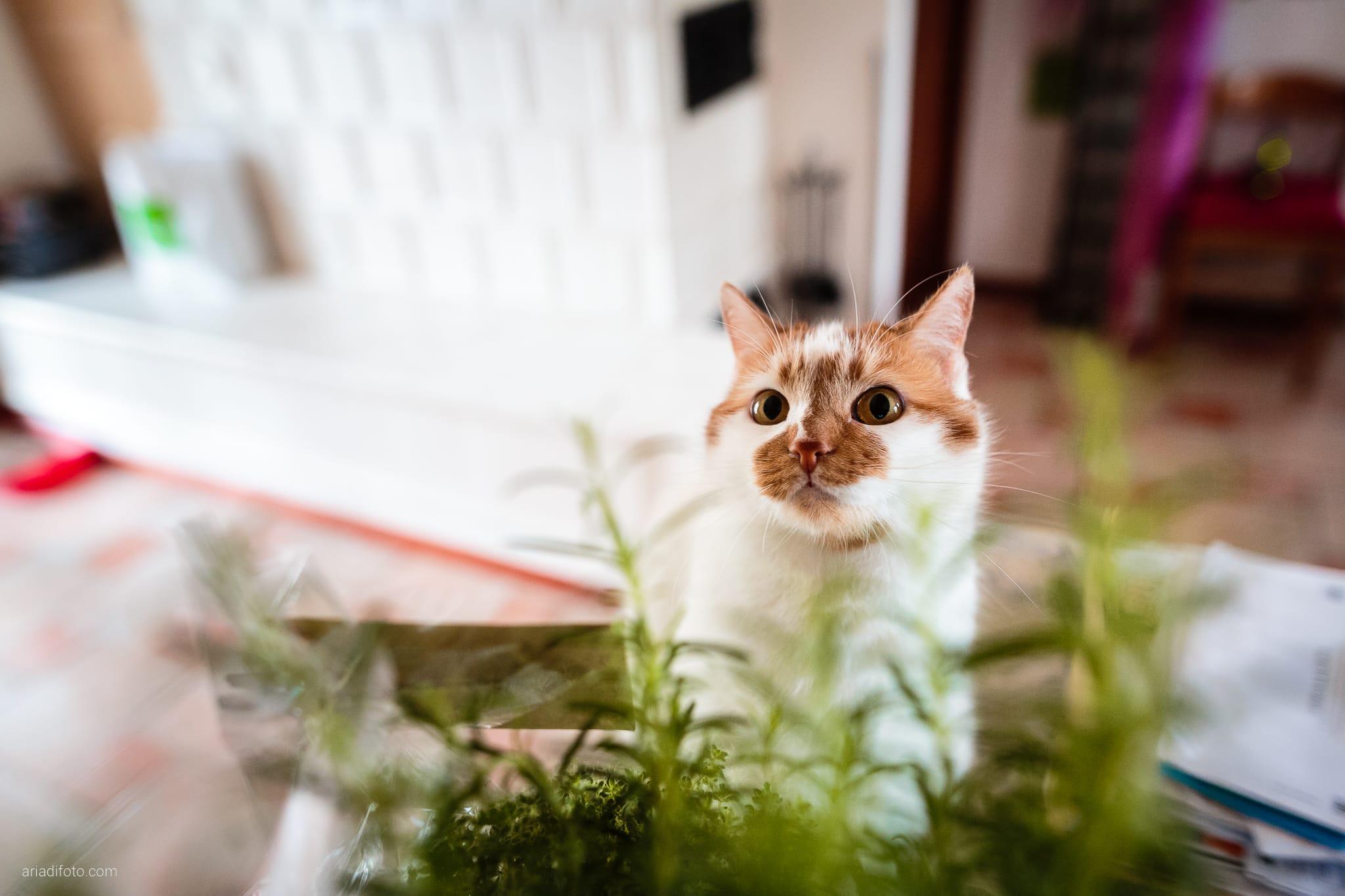 Agnese Alessandro Matrimonio Centro Visite Gradina Doberdo Gorizia Farra preparativi gatto