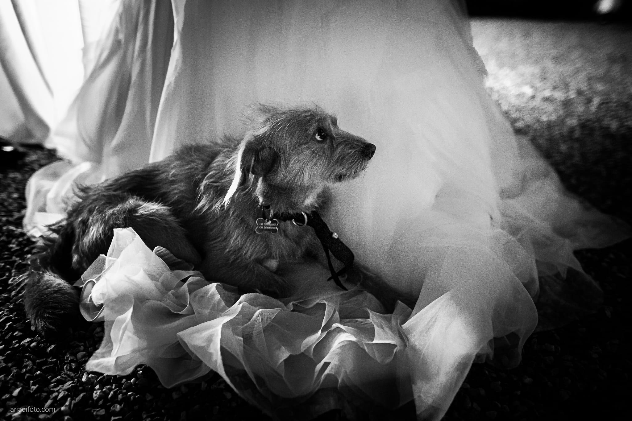 Martina Daniele Matrimonio Duino Baronesse Tacco Collio Gorizia ricevimento cani abito sposa